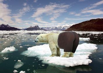 Polar Bear in Yoga Pants